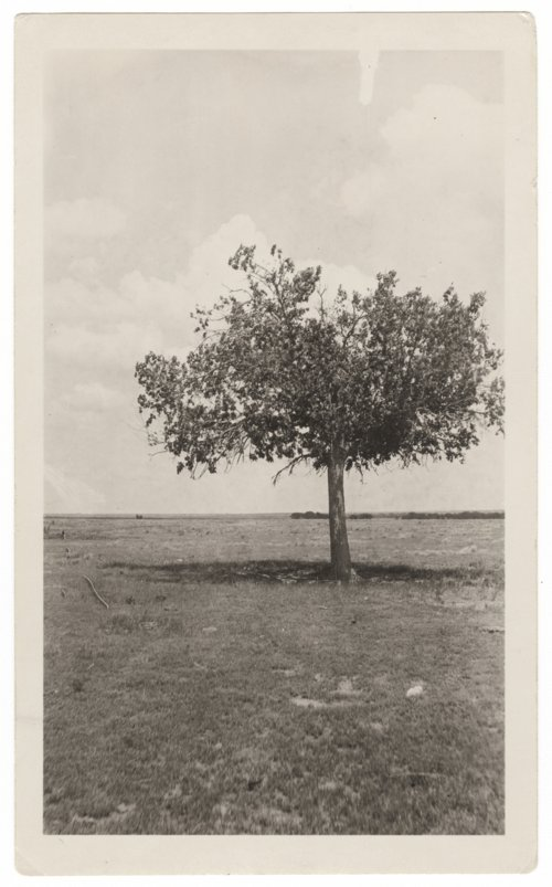 Hackberry tree, old Fort Wallace, Wallace County, Kansas - Page