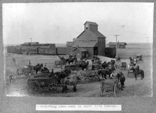 Cane seed, Scott City, Kansas - Page