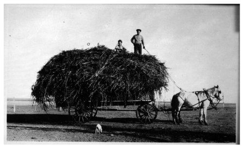 Hauling feed, Lane County, Kansas - Page