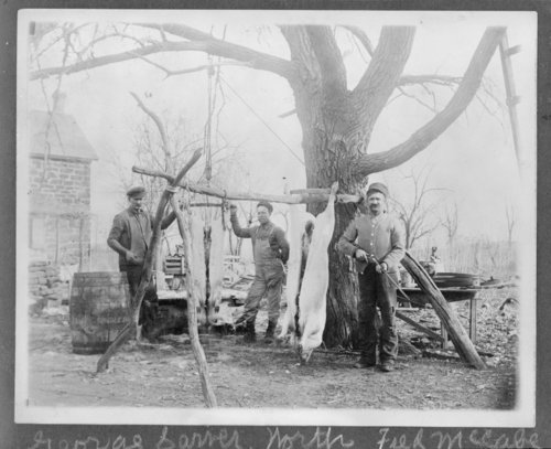 Butchering hogs,Saline County, Kansas - Page