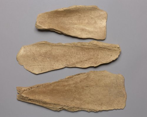 Bison Scapula Hoes from the Crandall Site, 14RC420 - Page