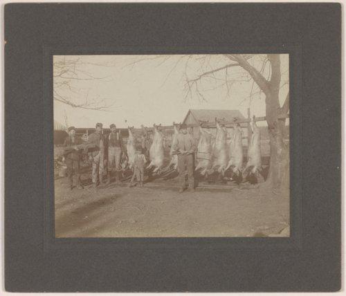 Butchering hogs on the Brosa farmstead, Valley Falls, Kansas - Page