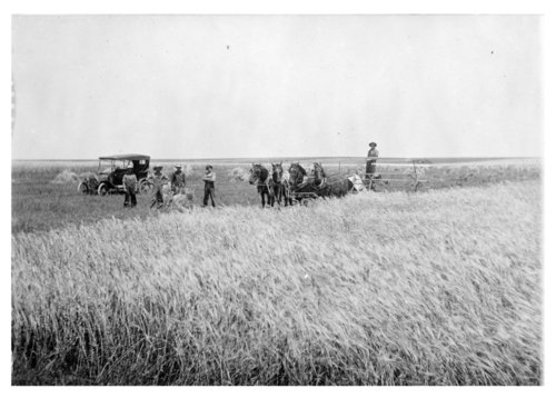 Binding wheat, Thomas County, Kansas - Page