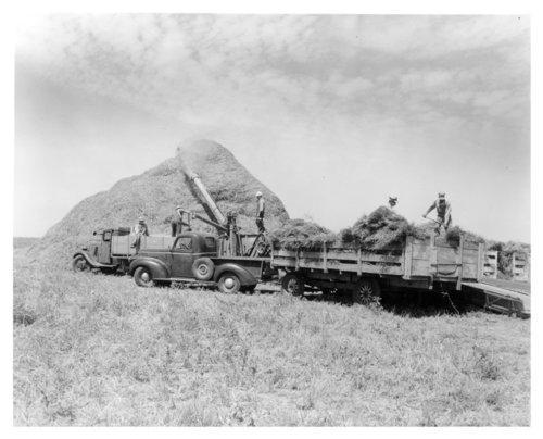 Charles Waters' crew threshing oats, Thomas County, Kansas - Page