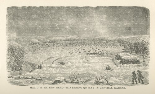 Maj. J. Smiths' herd wintering on hay in central Kansas - Page