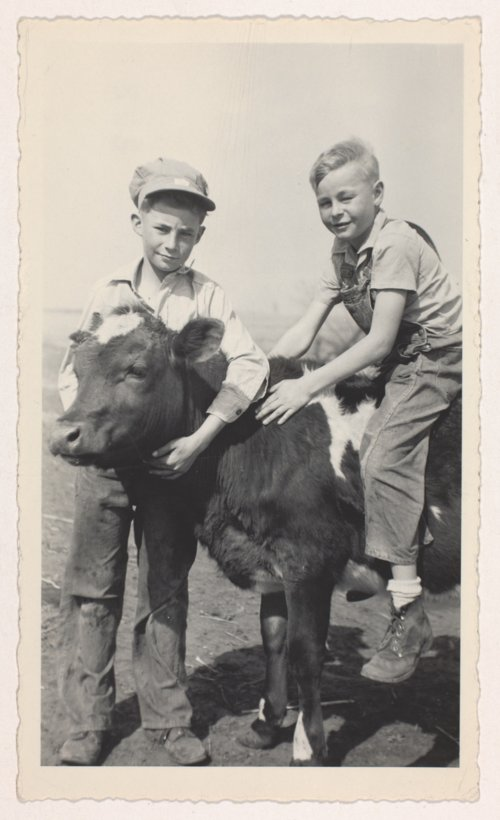 Albert and Jerry Brosa with a calf on the Brosa farm in Jefferson County, Kansas - Page