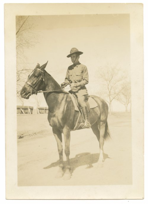 Horses and mules at Fort Riley, Kansas - Page