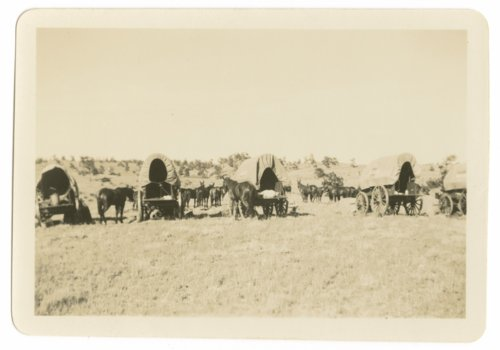 Horses, mules and covered wagons at Fort Riley, Kansas - Page