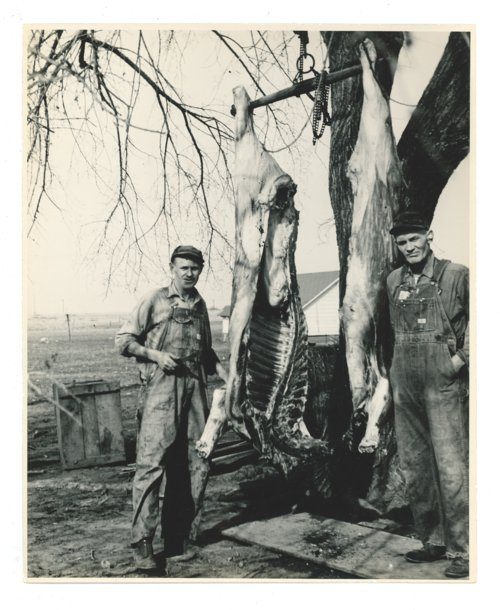 Farmers butchering cows, Butler County, Kansas - Page