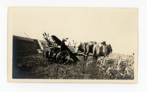 Percherons and farm woman in kaffir field, Butler County, Kansas - Page