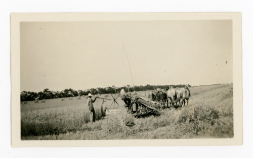 Men using a horse-drawn reaper to harvest wheat, Butler County, Kansas - Page
