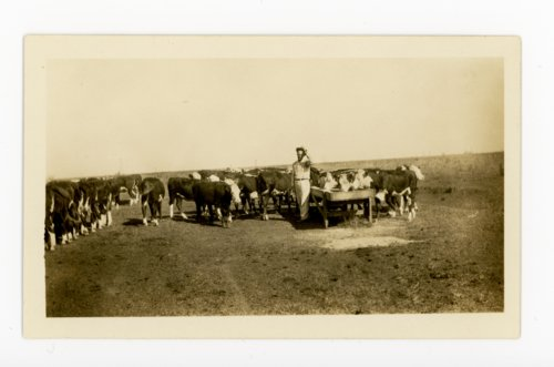 Stockman feeding cattle, Butler County, Kansas - Page