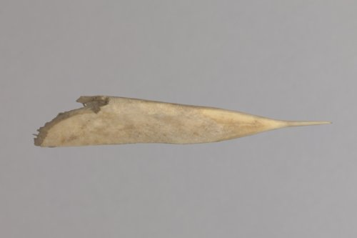 Bone Awl from the Kermit Hayes No. 1 Site, 14RC3 - Page