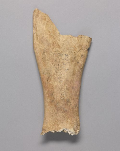 Bison Scapula with an Engraved Star from the Radio Lane Site, 14CO385 - Page