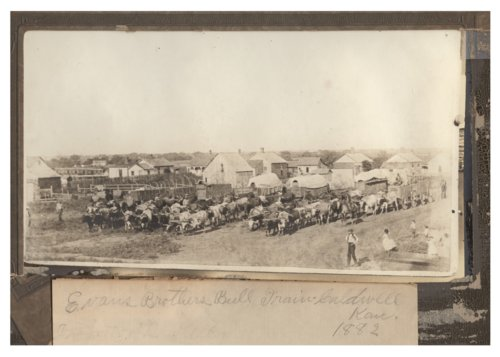 Evans Brothers bull train in Caldwell, Kansas - Page