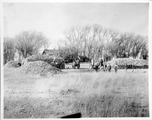 Steever farm corn harvesting, Edwards County, Kansas - Page