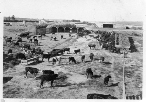 Bowie and Harwi feedlot, Logan County, Kansas - Page