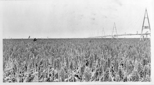 Milo field, Logan County, Kansas - Page
