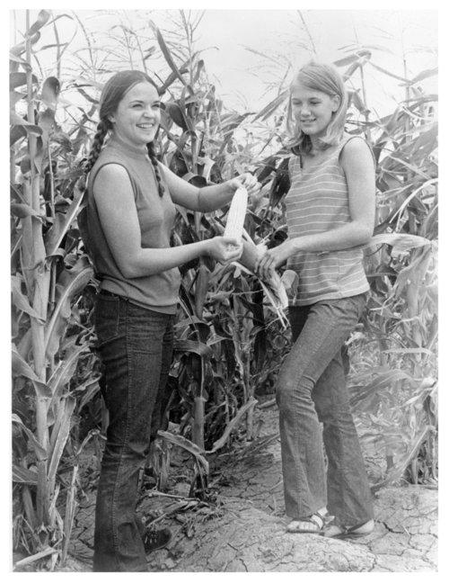 Corn field, Logan County, Kansas - Page