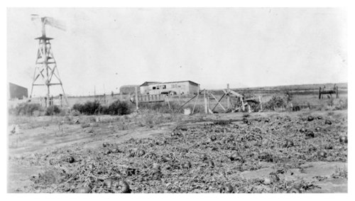 Amos Bull's farm garden, Logan County, Kansas - Page