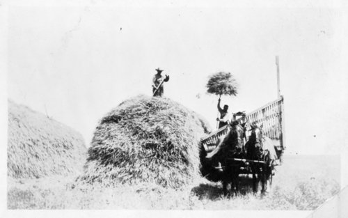 Stacking wheat, Logan County, Kansas - Page