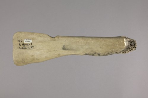 Bison Scapula Hoe from the Aerhart Site - Page