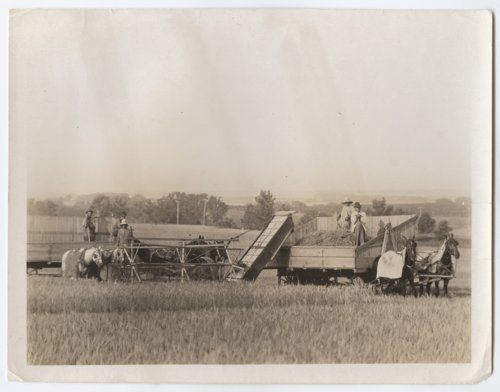 Harvesting wheat with a header and barges, Kansas - Page