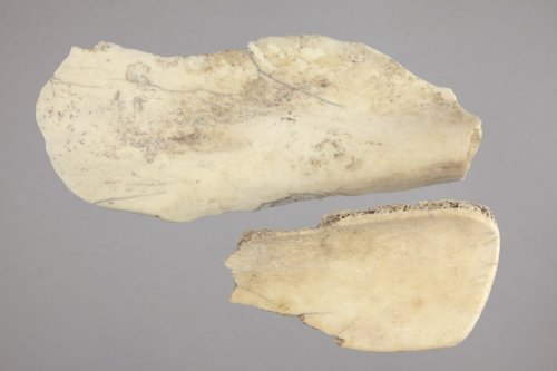 Bison Scapula Hoe Fragments from the Tobias Site, 14RC8 - Page