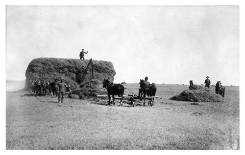 Haying scene, Scott County, Kansas - Page
