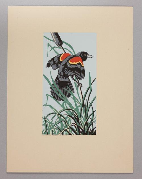 Portfolio of Kansas Birds - Page