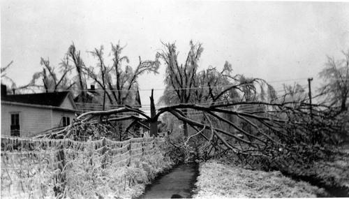 Damage caused by an ice storm, McLouth, Kansas - Page