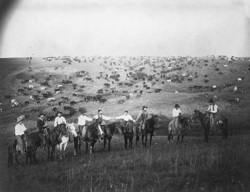 Cowboys with a herd of cattle - Page