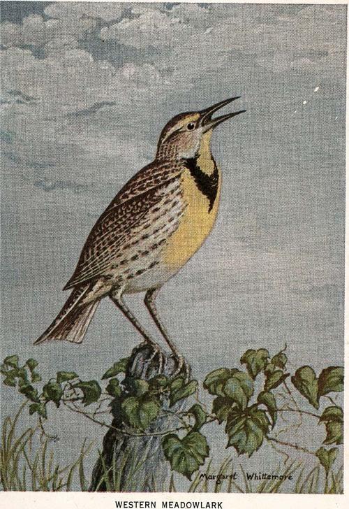 Meadowlark - Page