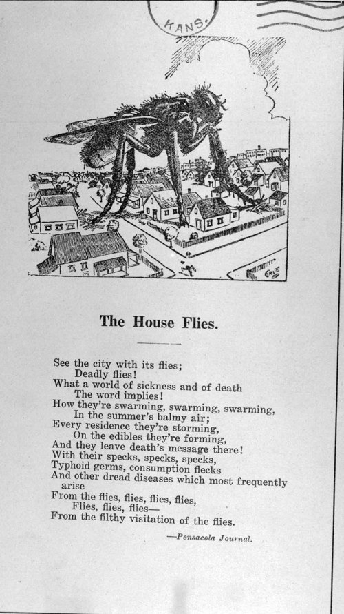 The house flies - Page