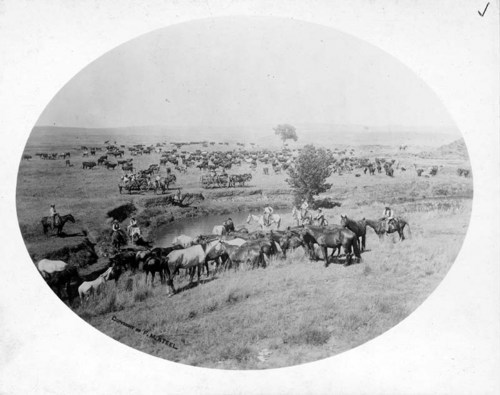 B. R. Grimes' mount and day herd, Woodward County, Oklahoma Territory - Page