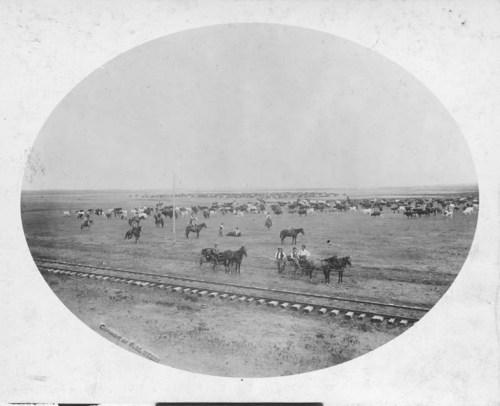 Round-up on the Nunnemacher and Edgar Ranch near Ashland, Kansas - Page