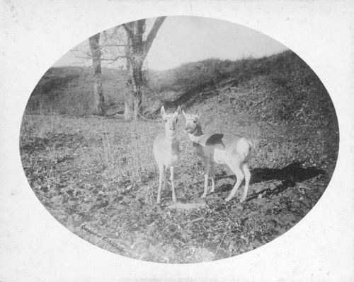 Two Antelope, Woodward County, Oklahoma Territory - Page