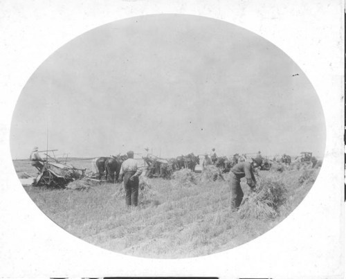 Harvesting on the Fabert farm near Greensburg, Kansas - Page