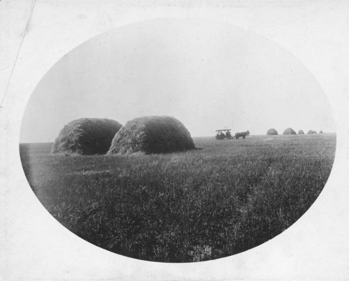 Wheat stacks in Kiowa County, Kansas - Page