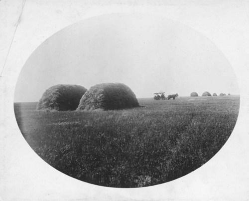 Wheat stacks in Kiowa County, Kansas - Page
