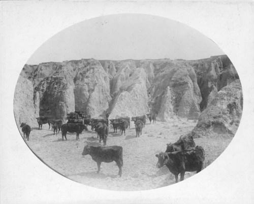 Marriage ranch, Kiowa County, Kansas - Page