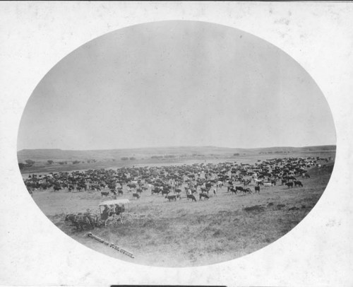 Cattle round-up on the Medicine River, Kiowa County, Kansas - Page