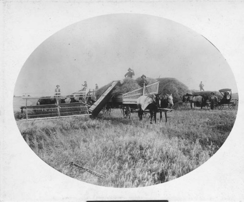 Photograph of farmers heading wheat in Kiowa County, between 1891 and 1903.