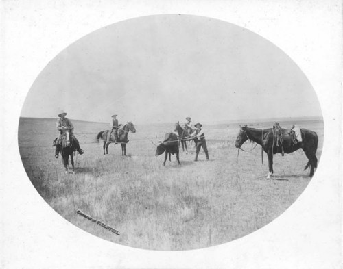 Roping an outlaw steer near Ashland, Kansas - Page