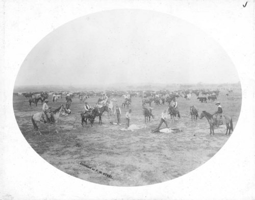 Branding calves on the Salt Fork, Barber County, Kansas - Page