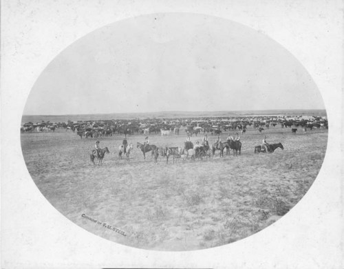 Cattle round-up on M. C. Campbell's ranch near Ashland, Kansas - Page