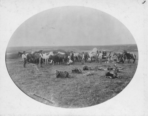Hobbling at the S--T ranch, Panhandle, Texas - Page