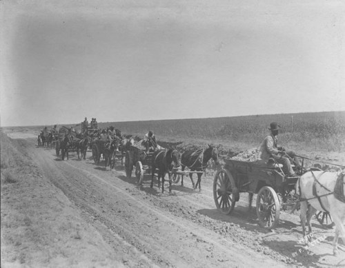 Hauling dirt for the railroad bed - Page
