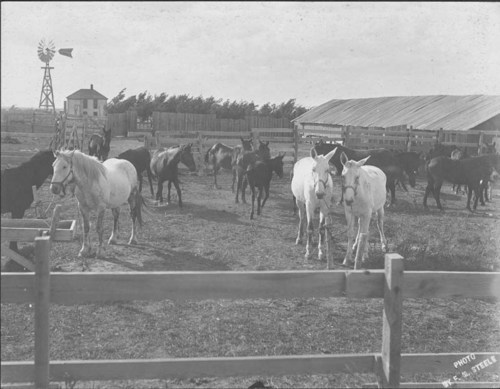 Horses and mules in a farm's corral - Page
