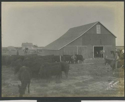 Cattle in a fenced pasture - Page